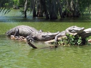 Cajun Swamp Tours