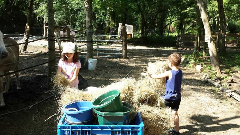 Sugar Roots Farm